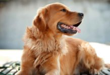 Одаренные интеллектом: ТОП-5 самых умных пород собак - today.ua