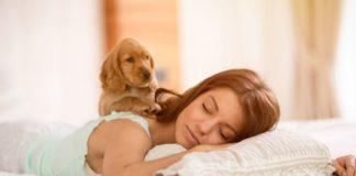 """Чому собака повинен спати з вами в одному ліжку: ТОП-5 причин """" - today.ua"""