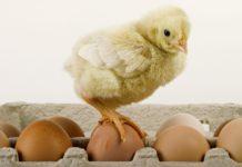 Що станеться, якщо яйця їсти щодня: як відреагує наш організм - today.ua