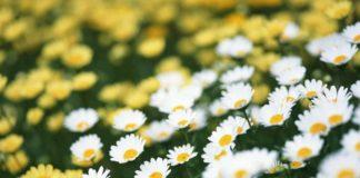 Свято 27 червня: народні традиції і прикмети в день Мефодія - today.ua