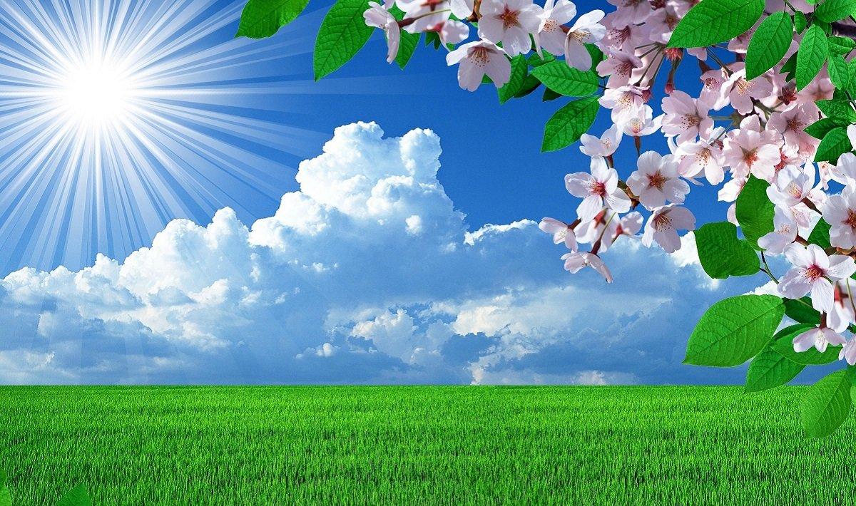 Погода в Україні на Трійцю буде кращою, ніж в ЄС: синоптики здивували прогнозом - today.ua