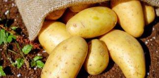 Ціни на молоду картоплю в Україні різко впали: скільки коштує стратегічний овоч - today.ua
