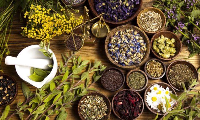 Свято 29 червня: день святого Тихона трави стають особливо цілющими
