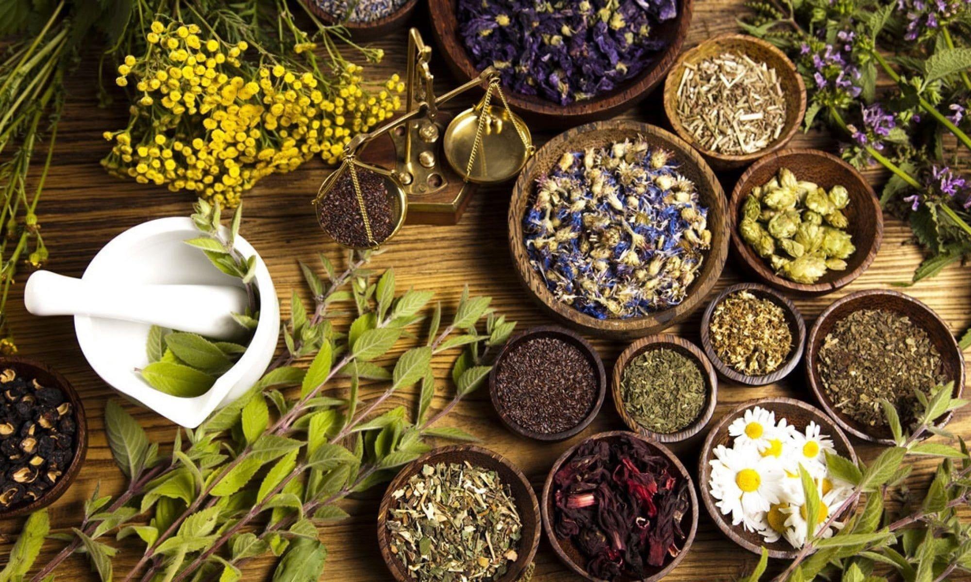 Свято 29 червня: у день святого Тихона трави стають особливо цілющими - today.ua