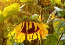 Погода в июле будет непредсказуемой и капризной: жара будет чередоваться с дождями - today.ua