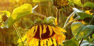 """Погода в июле будет непредсказуемой и капризной: жара будет чередоваться с дождями """" - today.ua"""