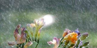 """Похолодання та дощі з грозами: що очікувати українцям від погоди у перші літні дні"""" - today.ua"""