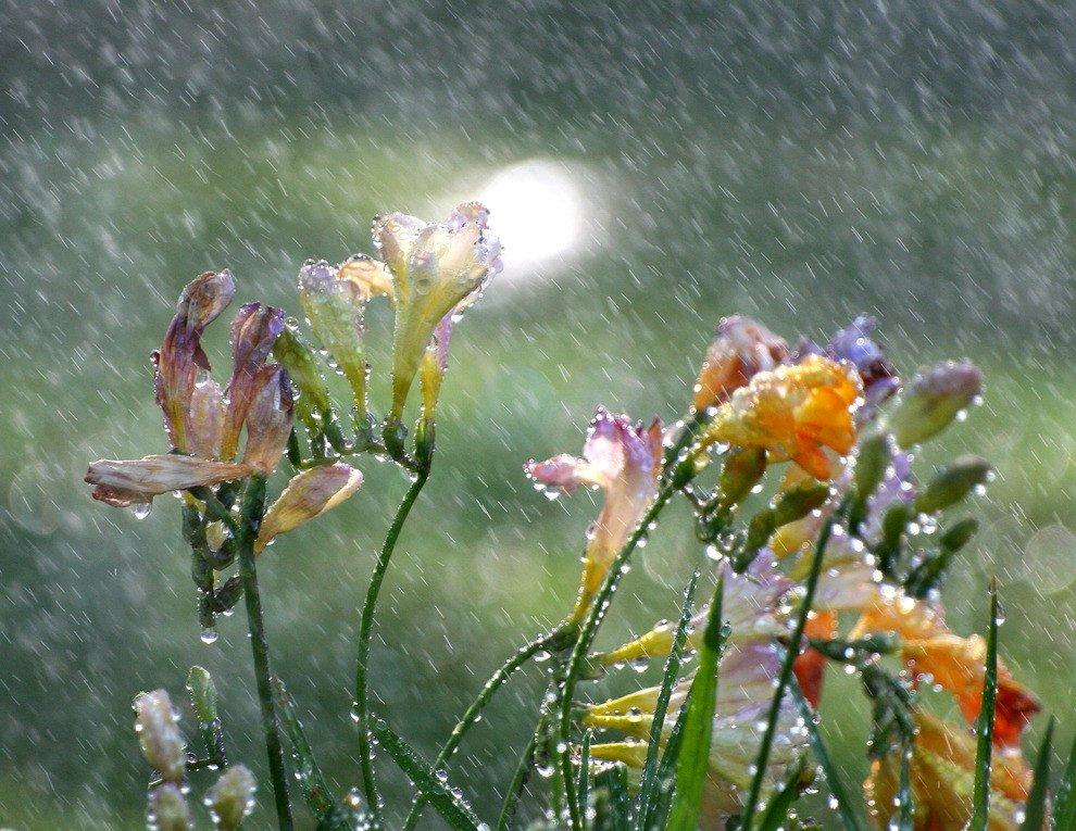 Похолодание и дожди с грозами: что ожидать украинцам от погоды в первые летние дни - today.ua