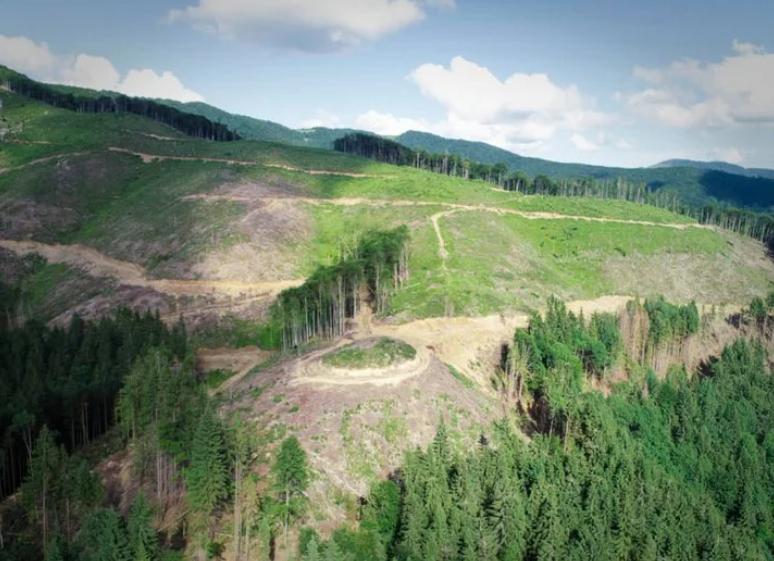 Україні загрожує нова екологічна катастрофа: Карпати залишаться без лісу