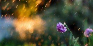"""Тропічне літо з дощами і грозами: синоптики розповіли про погоду на вихідні"""" - today.ua"""