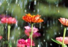 Спека в Україні відступає: синоптики назвали області, які накриють зливи зі шквалами - today.ua