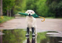 Україну знову накриють дощі з грозами і градом: синоптики оголосили штормове попередження - today.ua