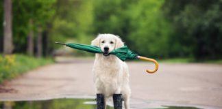"""Украину снова накроют дожди с грозами и градом: синоптики объявили штормовое предупреждение"""" - today.ua"""