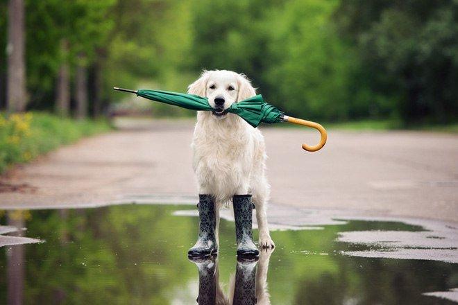 Украину снова накроют дожди с грозами и градом: синоптики объявили штормовое предупреждение - today.ua