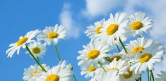 Свято 23 червня: Тимофієві знамення привернуть в оселю примар і великі зміни - today.ua