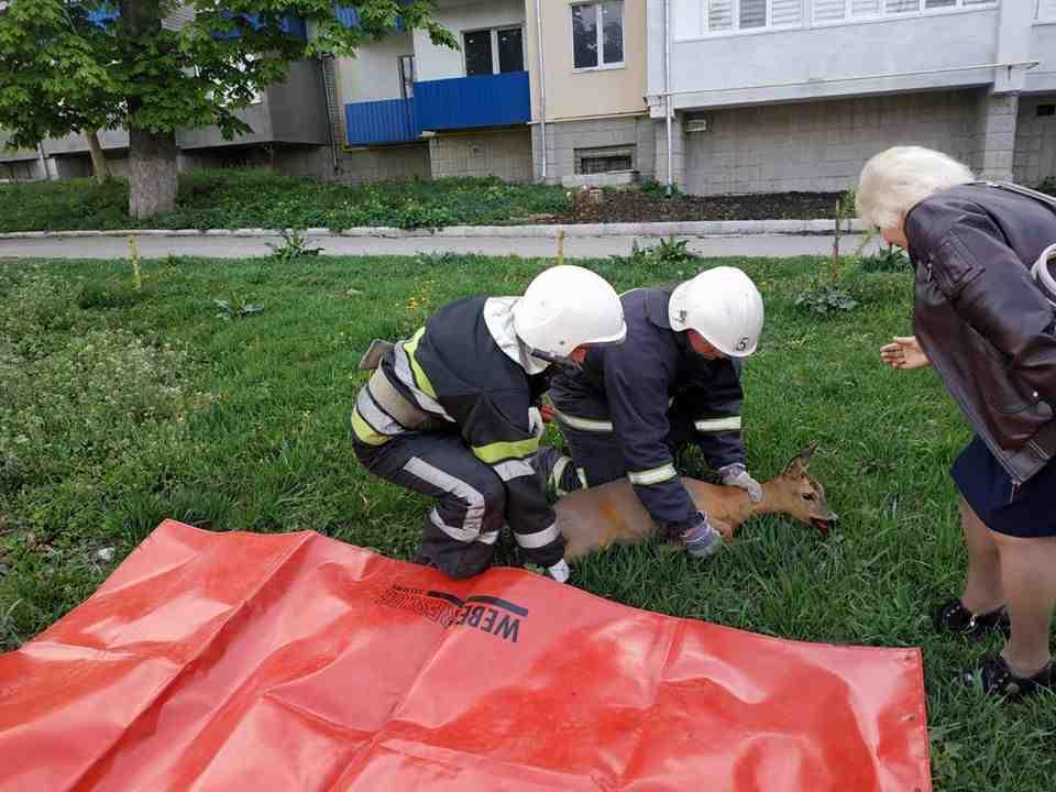 Що відбувається з природою в Україні після карантину: страшне зізнання еколога