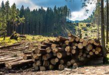 Украине грозит новая экологическая катастрофа: Карпаты останутся без леса - today.ua