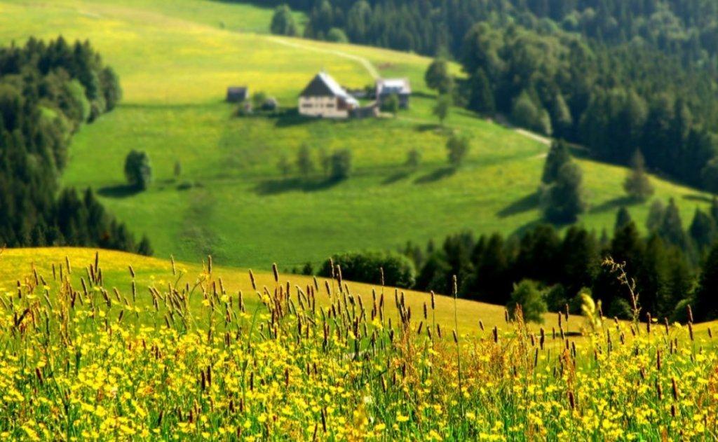 Лето в Украине будет капризным: синоптики рассказали, каких погодных аномалий ожидать в ближайшие три месяца  - today.ua