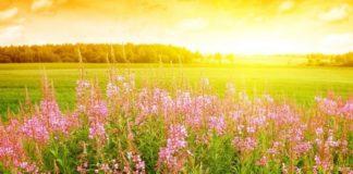 """Дощі відступлять і почнеться літо: синоптики назвали ряд областей, яким пощастить з погодою на тиждень"""" - today.ua"""