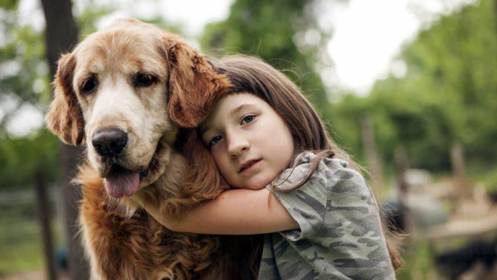 Чіпування домашніх тварин: за відмову українцям доведеться заплатити майже чотири мінімалки