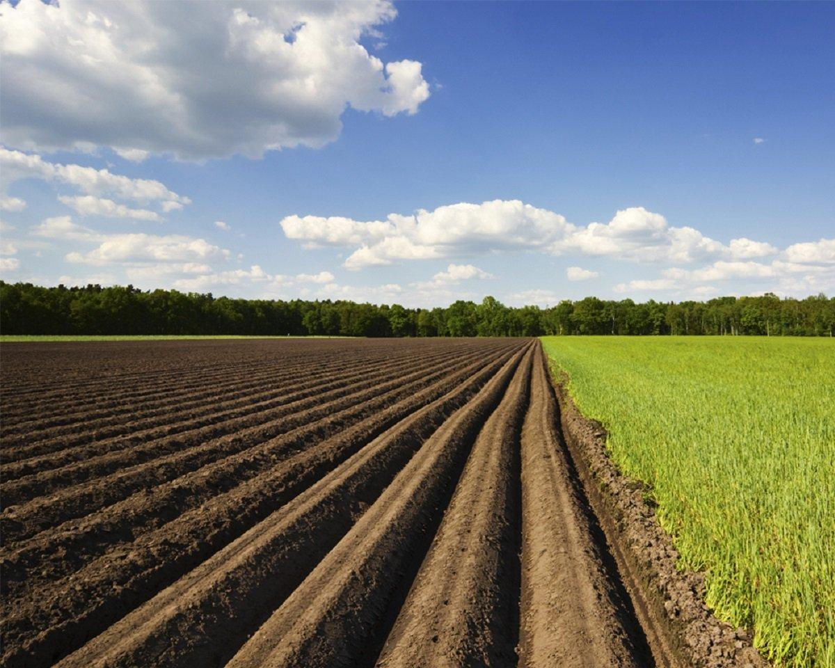 Владельцы земельного пая должны оформить право собственности: новые требования Минюста