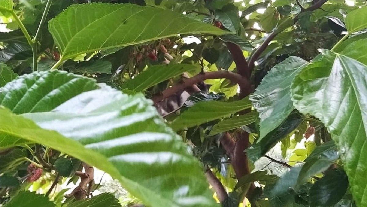 Тест на уважність: знайдіть кошеня серед зеленого листя за 1 хвилину - today.ua