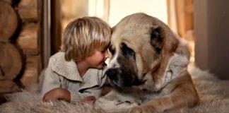 """Кращі породи собак для малюка – поради кінологів"""" - today.ua"""