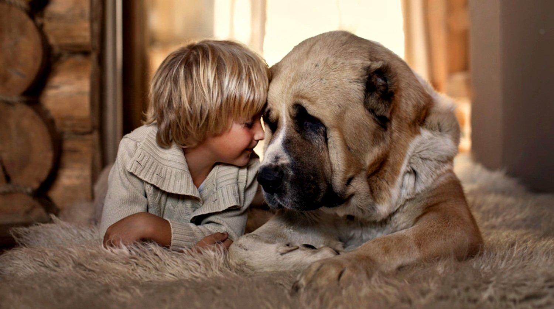 Кращі породи собак для малюка – поради кінологів - today.ua