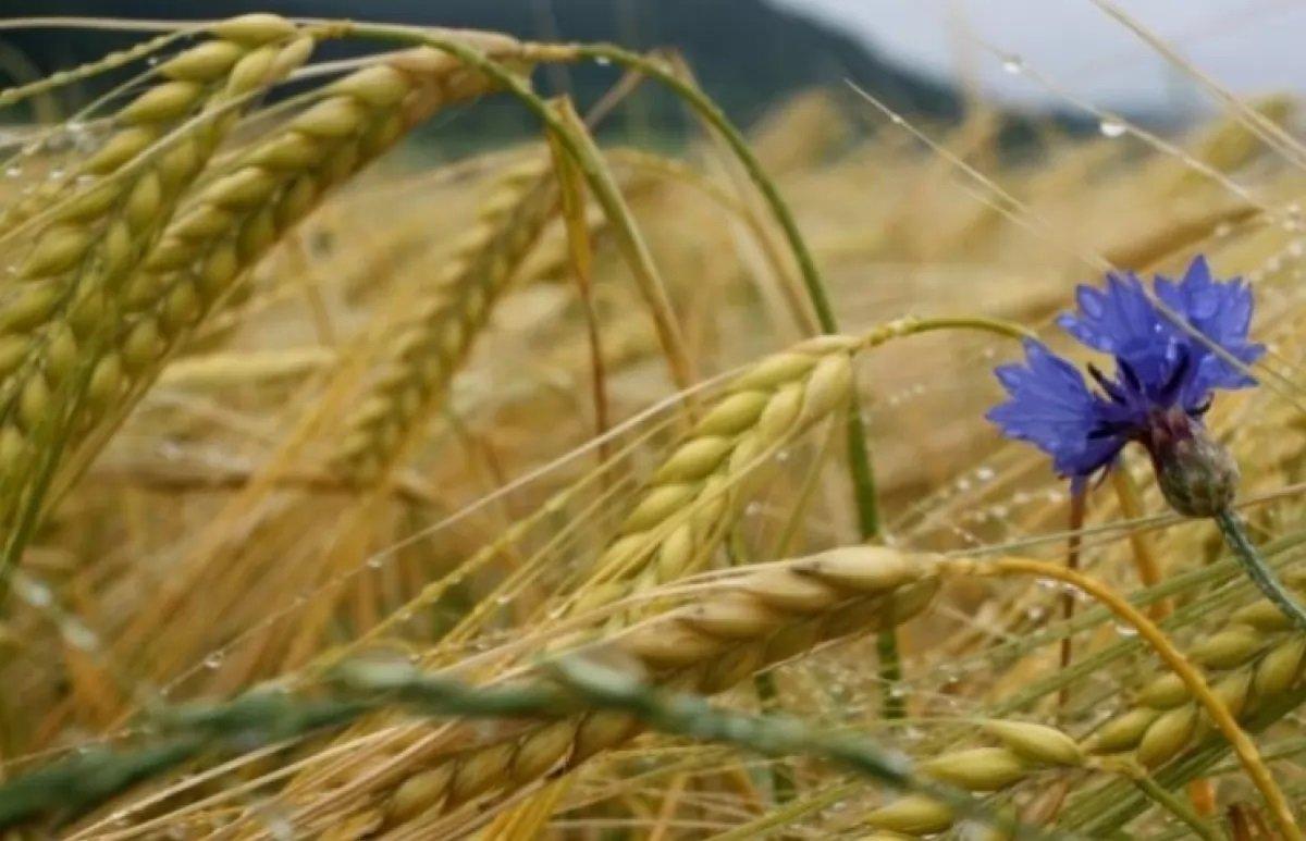 Свято 1 серпня: народні прикмети та традиції в день святої Макрини