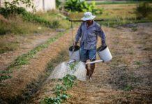 Украинцы заплатят 6000 грн налога за пай: «Слуги народа» добрались до мелких земледельцев - today.ua