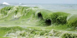 """Чорне море загине вже через 20 років: екологи б'ють на сполох"""" - today.ua"""