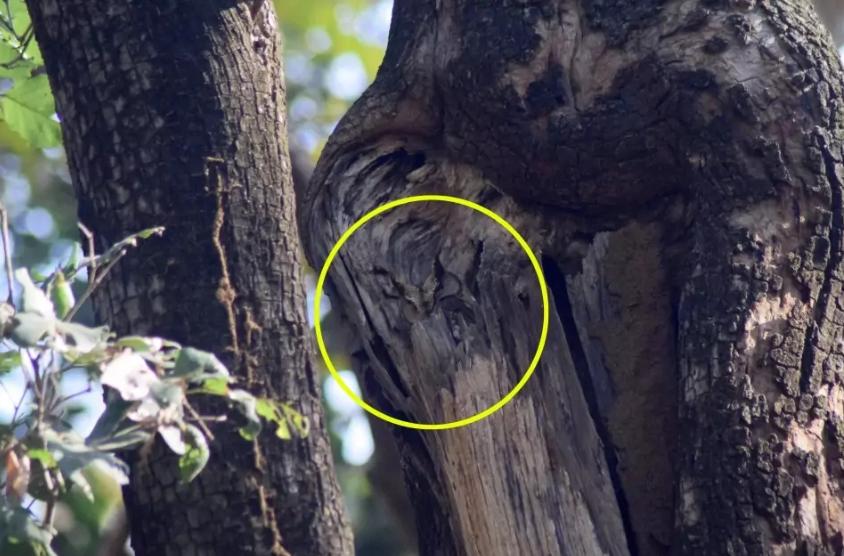 Тест на уважність: знайдіть на фото сову, яка причаїлася на дереві