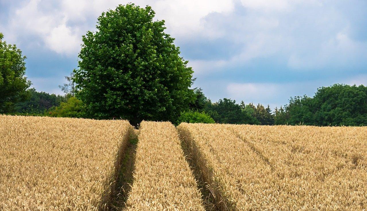 Владельцы земельного пая должны оформить право собственности: новые требования Минюста - today.ua