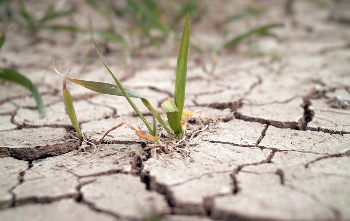 Сильнейшая засуха надвигается на Украину: какие регионы пострадают от жары больше всего