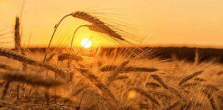 """Свято 29 липня: обряд на хороший урожай в день пам'яті Афіногена і дев'яти його учнів"""" - today.ua"""