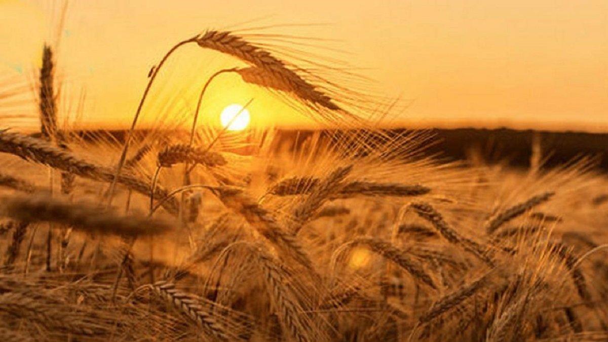 Свято 29 липня: обряд на хороший урожай в день пам'яті Афиногена і дев'яти його учнів