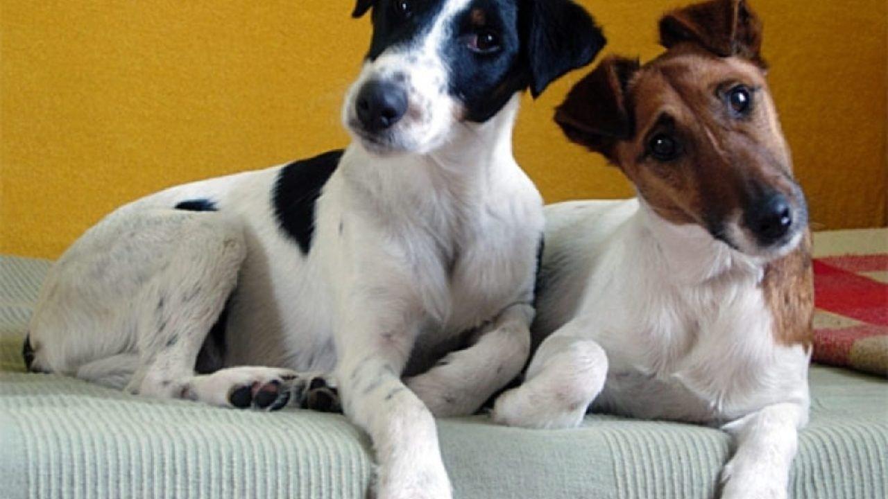 Лучшие породы собак для малыша – советы кинологов
