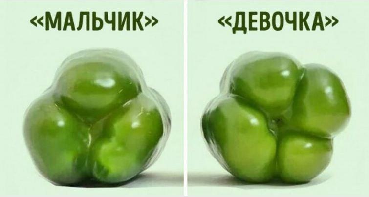 Как правильно выбирать перец для фаршировки и салата: раскрыто главный секрет