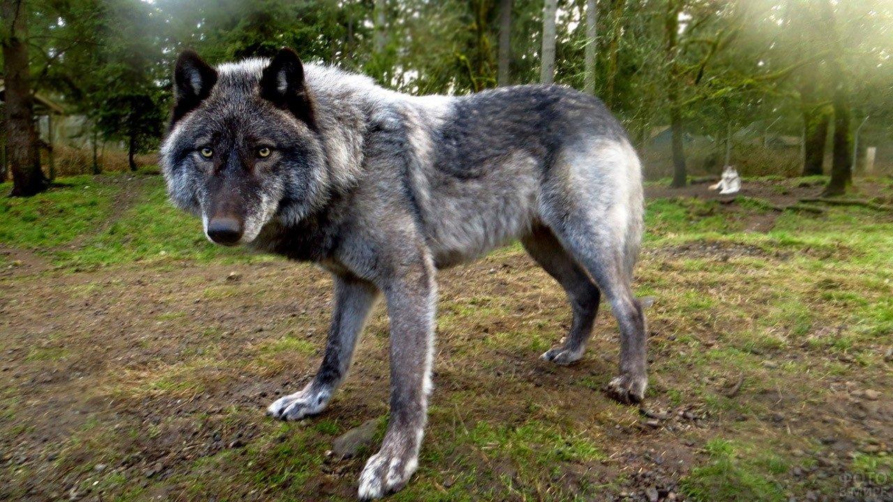 Найбільш небезпечні породи собак, яких не можна заводити новачкам