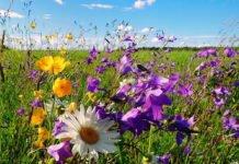 Праздник 5 июля: что принято делать в день Евсевия, и почему нужно идти в лес - today.ua