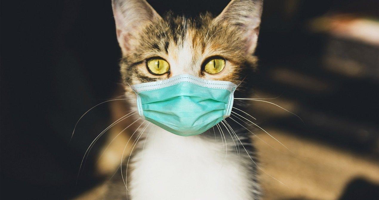 Топ-3 самых здоровых пород кошек: усатые питомцы с самым крепким иммунитетом - today.ua