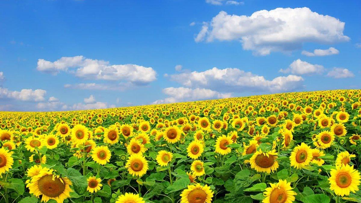 Вихідні дні в серпні: чим порадує громадян України останній місяць літа - today.ua