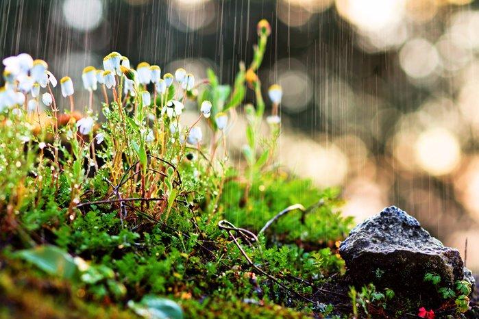 Україну знову накриють дощі з грозами: прогноз синоптиків на початок нового тижня  - today.ua