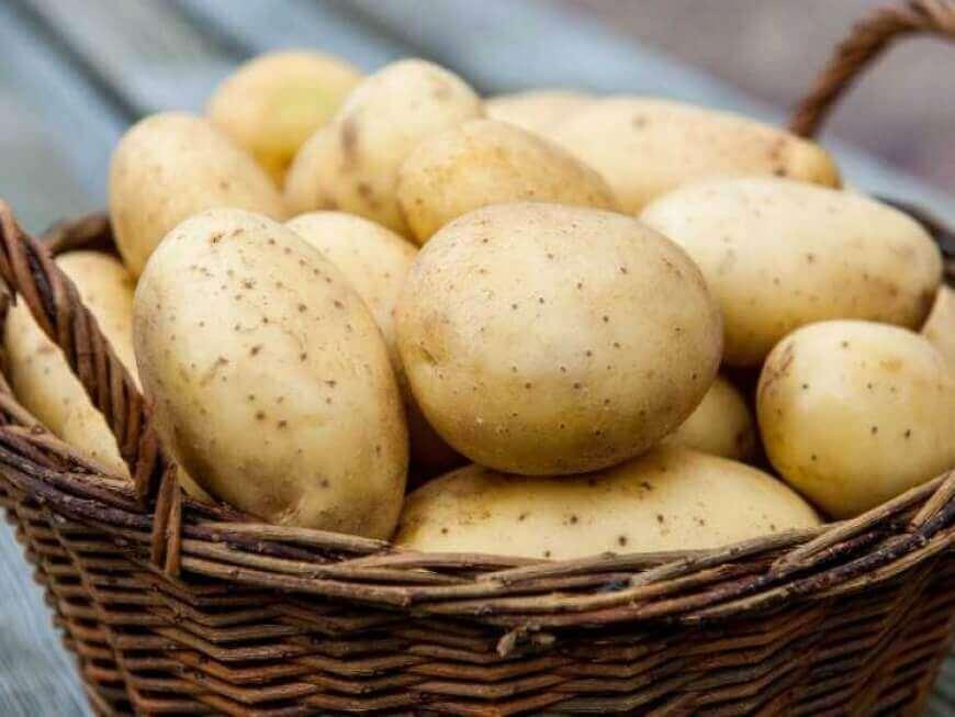 В Україні різко подешевшала картопля: експерти назвали причину  - today.ua