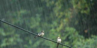 """На этой неделе Украину зальет дождями: синоптики назвали области, которым не повезет с погодой"""" - today.ua"""