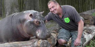 """У Київському зоопарку відвідувачі перегодували бегемотиху: бідолаха мало не померла"""" - today.ua"""