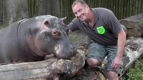 У Київському зоопарку відвідувачі перегодували бегемотиху: бідолаха мало не померла - today.ua