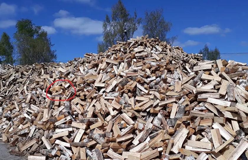 Тест на внимательность: найдите на фото кота среди дров за 20 секунд