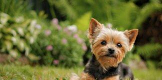 """ТОП-5 порід собак, які не мають неприємного запаху """" - today.ua"""