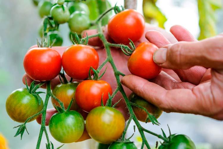 Фрукти і овочі після карантину виростуть у ціні: експерти розповіли українцям, чого чекати восени